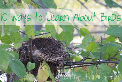 10 Ways to Learn About Birds