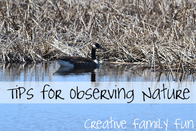 Tips for Observing Nature With Small Children