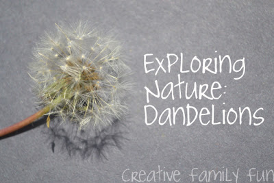 Exploring Nature: Dandelions