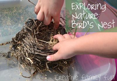Exploring Nature: Bird's Nest