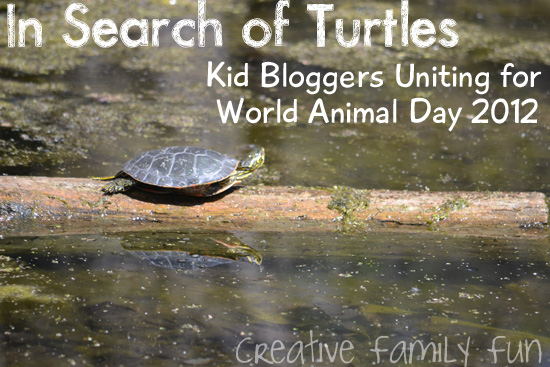In Search of Turtles {World Animal Day 2012}