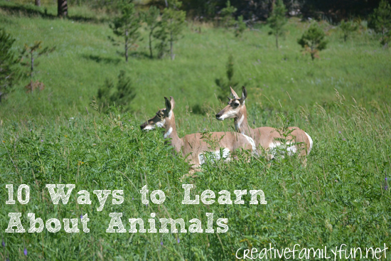 Kids are so fascinated by animals and it's such an easy subject to get them interested in. Here are 10 fun ways to learn about animals that your kids will sure to love.