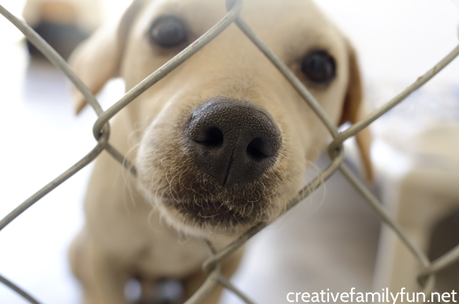 Fun Ways to Help Your Local Animal Shelter