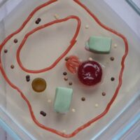 Cell biology for kids - Plant cell model