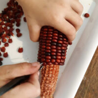 10 Ways to Use Indian Corn for Autumn Learning